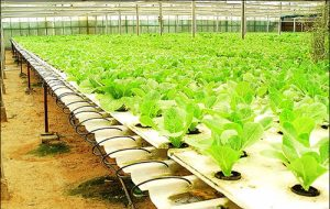 Article hydroponic