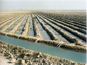 Article soils and irrigation