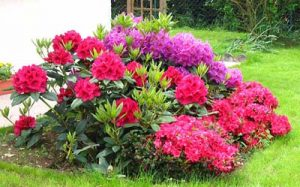 Planting and propagation of ornamental plants